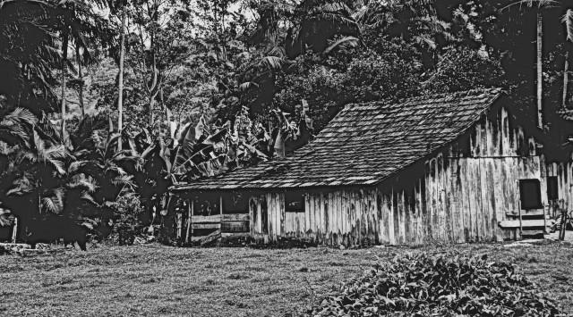 La forêt de Thoreau