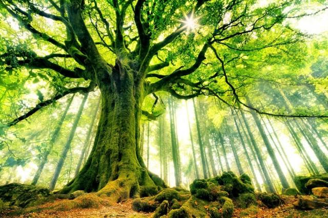 Les arbres sont des êtres sensibles au même titre que les animaux et les humains