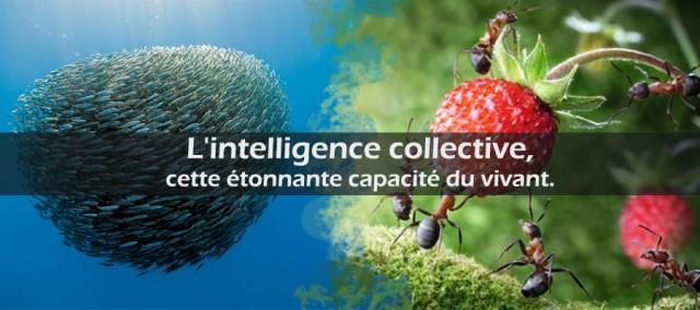 L'intelligence collective, cette étonnante capacité du vivant.