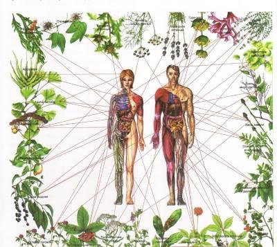 b2ap3_thumbnail_plantes-chakras2.jpg