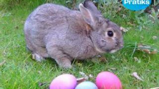 D'où vient le lapin de Pâques ?