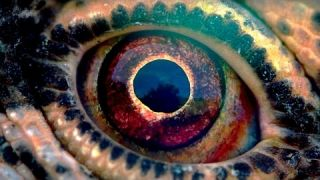 VOYAGE OF TIME Bande Annonce (Brad Pitt - Cate Blanchett - 2016)