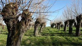 Projet d'agroforesterie et trognes en France
